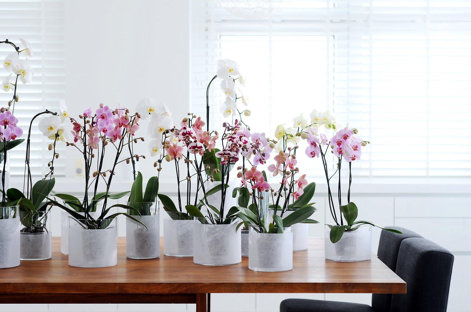Как из одной орхидеи сделать несколько