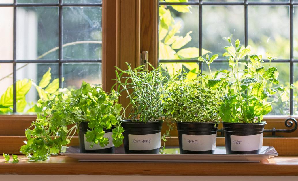 Выращивание зелени на подоконнике фото 62