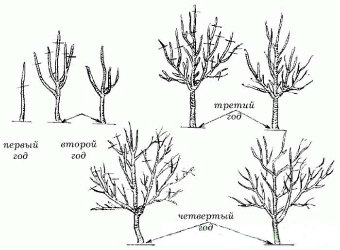 Как обрезать садовые деревья видео