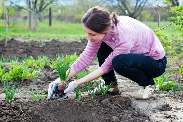 Весенние работы сад огород